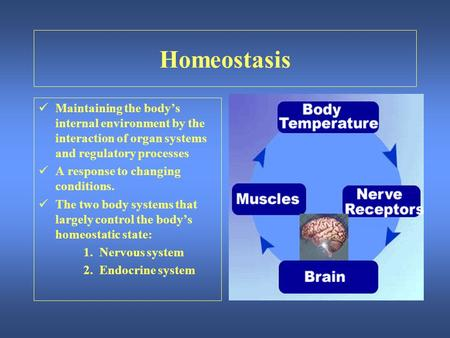 Homeostasis Maintaining the body's internal environment by the interaction of organ systems and regulatory processes A response to changing conditions.