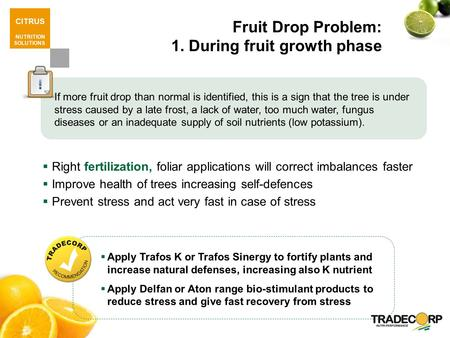 CITRUS NUTRITION SOLUTIONS Fruit Drop Problem: 1. During fruit growth phase  Right fertilization, foliar applications will correct imbalances faster 