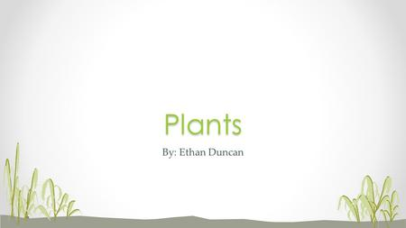 By: Ethan DuncanPlants. Plants are living organisms that cover much of the land of planet Earth. You see them everywhere. They include grass, trees, flowers,