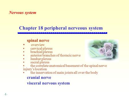 Chapter 18 peripheral nerveous system