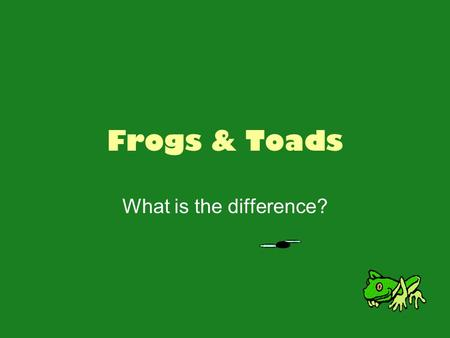 Frogs & Toads What is the difference?. Frogs! Two bulging eyes Strong, long, webbed hind feet that are adapted for leaping and swimming Smooth or slimy.