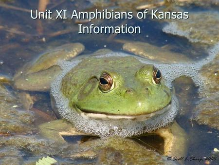 Unit XI Amphibians of Kansas Information. Introduction to Amphibians Class Amphibia: Class Amphibia: 31 species of amphibians in Kansas, including salamanders.