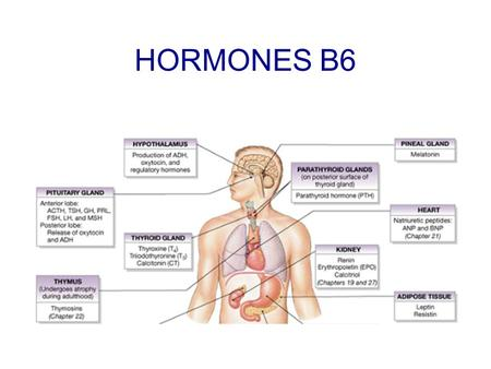 "HORMONES B6. Hormones – chemical messengers Produced in the endocrine glands and secreted directly into the blood. Only effect cells that have ""target."