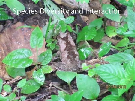 Species Diversity and Interaction. Tropical Rainforest Value Plants are a source of… …oxygen …genetic innovation …potential medicinal compounds …and a.
