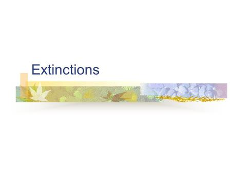 Extinctions. Loss of Biodiversity EXTINCTION - the disappearance of a species Extinctions have been occurring constantly at a low 'background rate', usually.