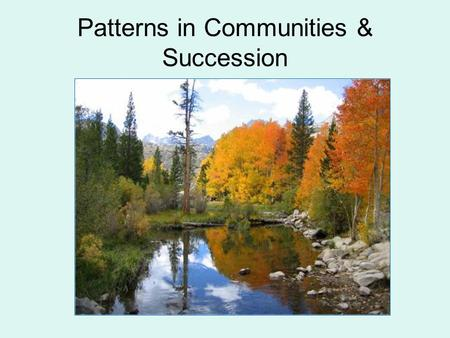 Patterns in Communities & Succession. Species Richness Species richness: number of species in a community Species evenness: relative abundance of species.