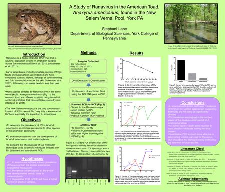 Hypotheses H1: A. americanus will have a lower prevalence of Ranavirus than the spotted salamander, Ambystoma maculatum. H2: Prevalence will be highest.