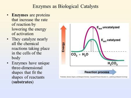 Enzymes as Biological Catalysts Enzymes are proteins that increase the rate of reaction by lowering the energy of activation They catalyze nearly all.