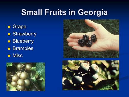 Small Fruits in Georgia