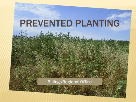 Billings Regional Office. PREVENTED PLANTING COVERAGE – THE FACTS  Policy and procedure address acreage eligible for prevented planting coverage and.