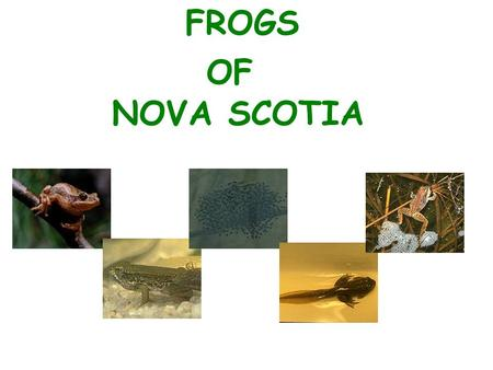 FROGS OF NOVA SCOTIA. Eight kinds of frogs Live in Nova Scotia. Northern Leopard Frog Eastern American Toad Northern Spring Peeper Green Frog Wood Frog.