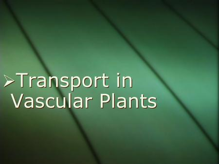  Transport in Vascular Plants. Overview: Pathways for Survival  For vascular plants, the evolutionary journey onto land involved differentiation into.