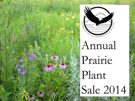 Annual Prairie Plant Sale 2014. Amorpha canescens Leadplant Family: Papilionaceae Category:Shrubs Height:24-36 in. (60-90 cm) Sun Exposure:Full Sun Bloom.
