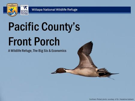 Willapa National Wildlife Refuge Pacific County's Front Porch A Wildlife Refuge, The Big Six & Economics Northern Pintail/photo courtesy of Dr. Madeline.