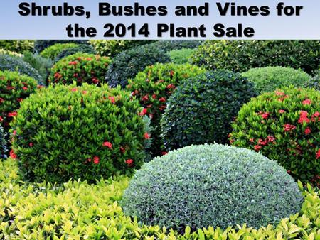 Shrubs, Bushes and Vines for the 2014 Plant Sale.