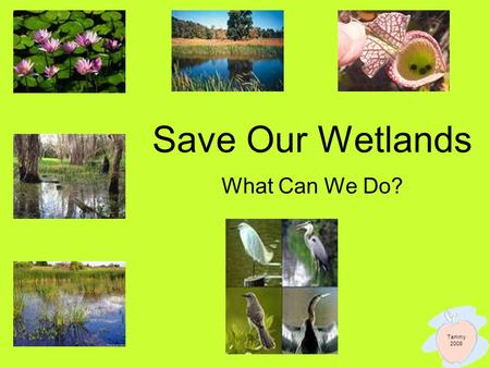 Save Our Wetlands What Can We Do? Tammy 2008. What Kids Can Do ~ Words From Other Kids Do not litter and pick up trash when you see it! –Kids can save.