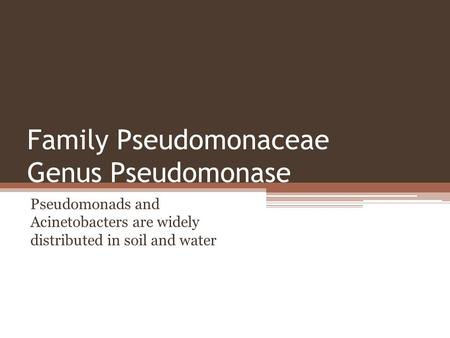 Family Pseudomonaceae Genus Pseudomonase Pseudomonads and Acinetobacters are widely distributed in soil and water.