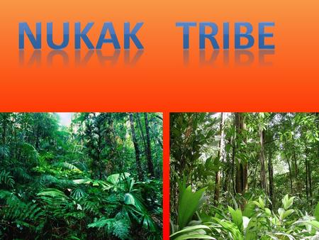 The Nukak tribe The Nukak tribe are one of the Amazon's few nomadic tribes that live in the deep forest away from the rivers. The people of this tribe.