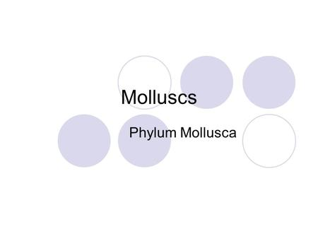 Molluscs Phylum Mollusca. Includes snails, clams, octopuses and others. There are more species of molluscs in the ocean than any other animal group. There.