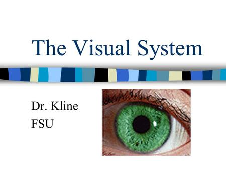 The Visual System Dr. Kline FSU. What stimuli are required for vision? Light- which can be thought of as discrete particles (photons) or traveling waves.