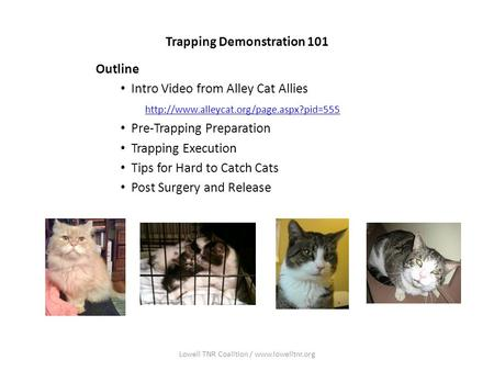 Trapping Demonstration 101 Outline Intro Video from Alley Cat Allies  Pre-Trapping Preparation Trapping Execution.