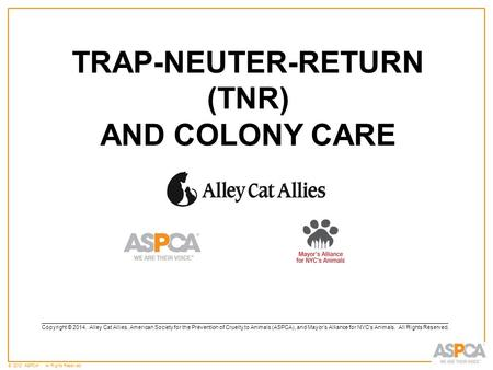 © 2012 ASPCA ®. All Rights Reserved. TRAP-NEUTER-RETURN (TNR) AND COLONY CARE ____________________________________________________________________________________________________________________________________.