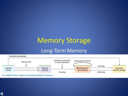 Memory Storage Long-Term Memory.