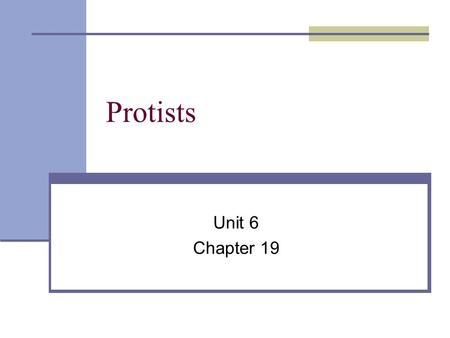 Protists Unit 6 Chapter 19.