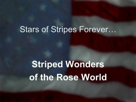 Stars of Stripes Forever… Striped Wonders of the Rose World.