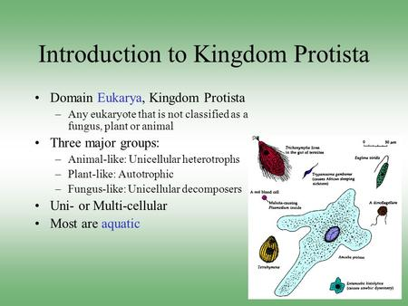 Introduction to Kingdom Protista Domain Eukarya, Kingdom Protista –Any eukaryote that is not classified as a fungus, plant or animal Three major groups: