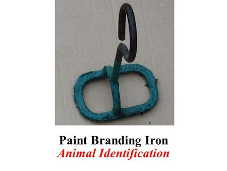 Paint Branding Iron Animal Identification. Ram Marking Harness Breeding, Reproduction, or Birthing.