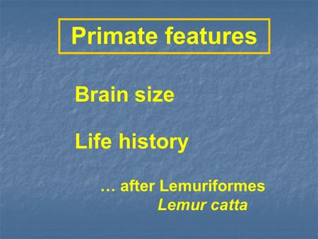 Primate features Life history Brain size … after Lemuriformes Lemur catta.
