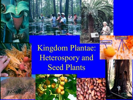 Kingdom Plantae: Heterospory and Seed Plants