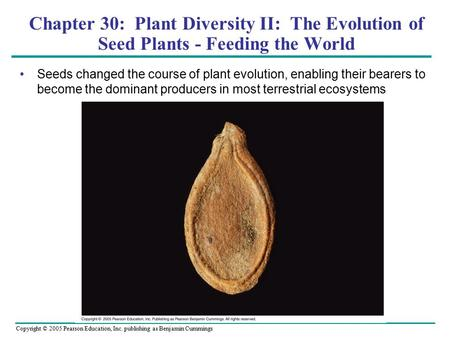 Copyright © 2005 Pearson Education, Inc. publishing as Benjamin Cummings Chapter 30: Plant Diversity II: The Evolution of Seed Plants - Feeding the World.
