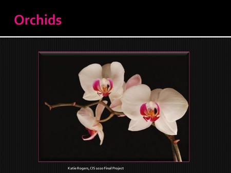 Katie Rogers, CIS 1020 Final Project  Orchids are the largest family of flowering plants.  There are more than 25,000 orchid species.  There can be.