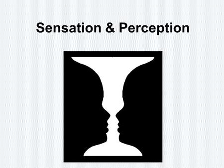 Sensation & Perception. How we perceive the world is much more than just an image transmitted to our brains!