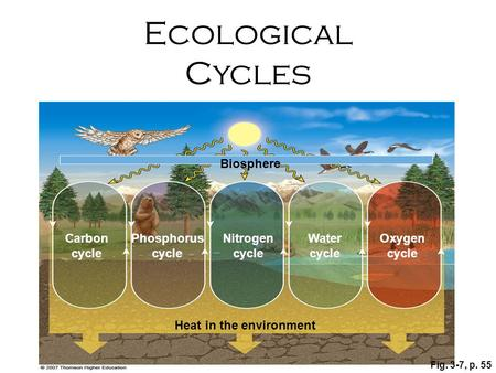 Fig. 3-7, p. 55 Nitrogen cycle Biosphere Heat in the environment Phosphorus cycle Carbon cycle Oxygen cycle Water cycle Ecological Cycles.