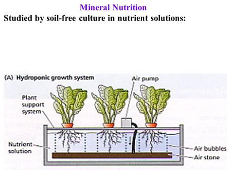 Mineral Nutrition Studied by soil-free culture in nutrient solutions: