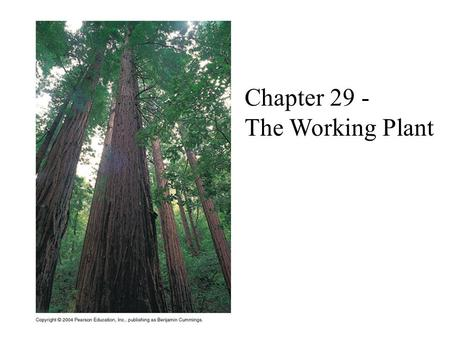 Chapter 29 - The Working Plant.