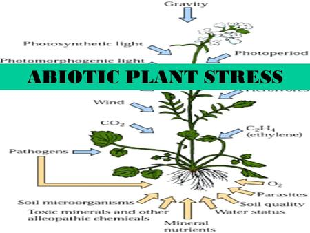1 ABIOTIC PLANT STRESS. 2 PLANT STRESS 1.Any external factors that negatively influence plant growth, productivity, reproductive capacity or survival.