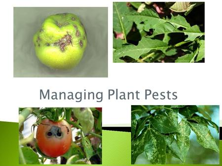 Managing Plant Pests.  MS‐LS2‐1 Analyze and interpret data to provide evidence for the effects of resource availability on organisms and populations.