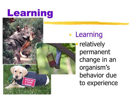 Learning  Learning  relatively permanent change in an organism's behavior due to experience.