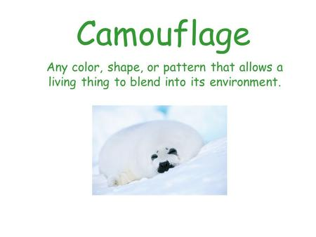 Camouflage Any color, shape, or pattern that allows a living thing to blend into its environment.