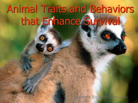 Animal Traits and Behaviors that Enhance Survival