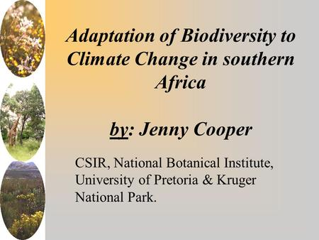Adaptation of Biodiversity to Climate Change in southern Africa by: Jenny Cooper CSIR, National Botanical Institute, University of Pretoria & Kruger National.