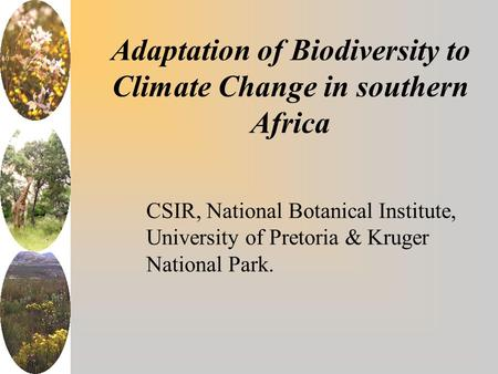 Adaptation of Biodiversity to Climate Change in southern Africa CSIR, National Botanical Institute, University of Pretoria & Kruger National Park.