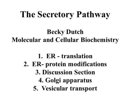 The Secretory Pathway Becky Dutch Molecular and Cellular Biochemistry 1. ER - translation 2. ER- protein modifications 3. Discussion Section 4. Golgi apparatus.