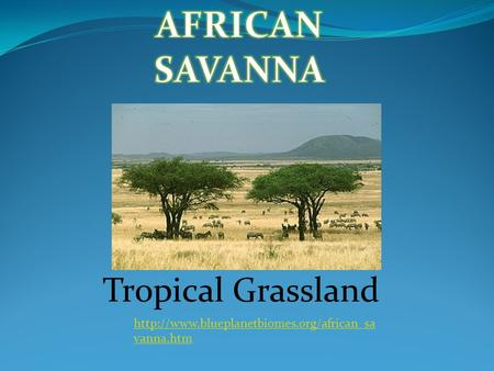 AFRICAN SAVANNA Tropical Grassland