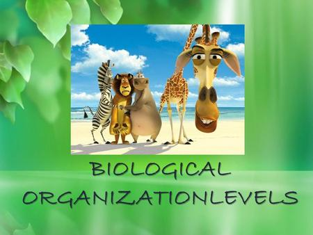 BIOLOGICAL ORGANIZATIONLEVELS. Species  Species is the technical name given for a kind of organisms for example all people are considered to be one species.