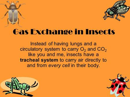 Gas Exchange in Insects Instead of having lungs and a circulatory system to carry O 2 and CO 2 like you and me, insects have a tracheal system to carry.